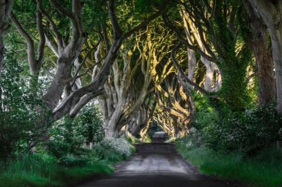 Irlande-du-Nord-Dark-Hedges